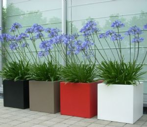 Fibreglass Square Pots from potstore.co.uk